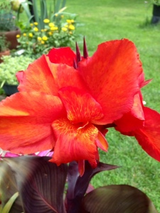 holy flower2